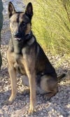 Accused Albuquerque police dog shooter was ex-con from Ariz.