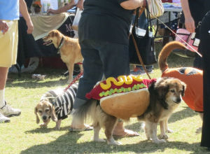 Dogtoberfest is Handi-Dogs big fundraiser