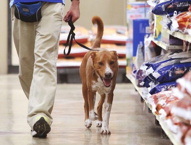 Meet Boston: Tucson shelter dog looks for forever home