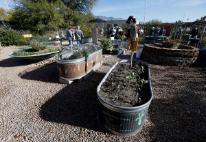 Log on and dig in: gardening lessons online