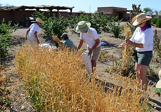 Tasting History At Mission Garden In Tucson Tucson