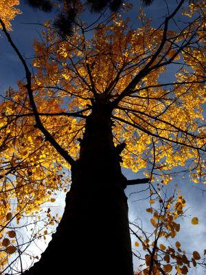 Autumn in Tucson poll