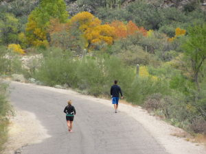 'Second autumn' dazzles in Sabino Canyon
