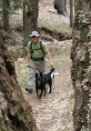 Dogs welcomed on some — but not all — trails