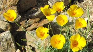 Neto's Tucson: What happened to our spring?