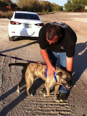 Trucker returns bull mastiff to Arizona owners