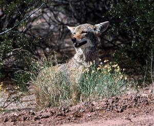 Tucson-area 'Varmint Roundup' is abruptly postponed