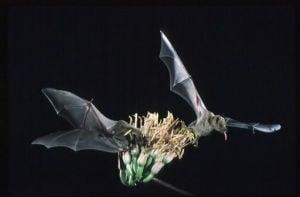 Calling citizen scientists: Bat project needs you