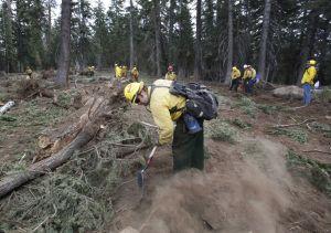 California: Permitirán tala de bosque quemado