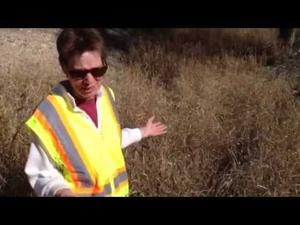 Buffelgrass threat: Why it matters to you