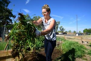 5 Tucson school gardens and the teachers who love them