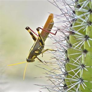 Photos: Readers' amazing insects
