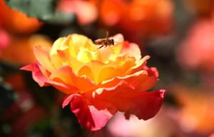 New calendar available for Sonoran Desert gardeners
