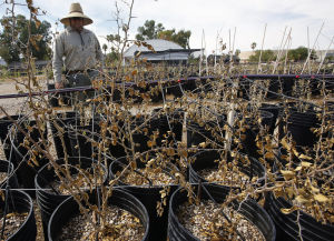 Vandal destroys thousands of plants at county nursery