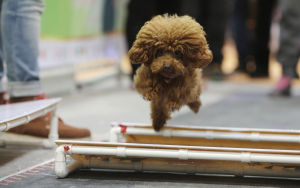 Photos: Shanghai Pet Fair