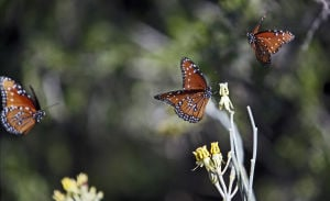 Loews Ventana Canyon opens butterfly garden