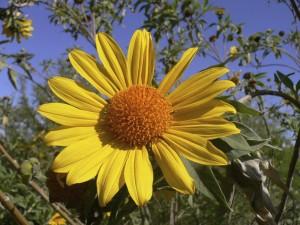 Tohono Chul flower book is garden-friendly