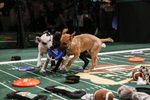 Puppy Bowl: Ruff and tumble