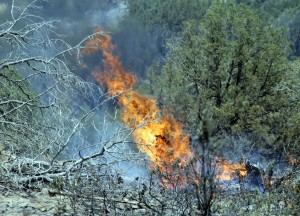 Many in S. Ariz. fire zone blame border crossers