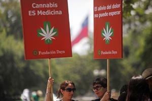 Mamás cultivan marihuana para medicar a sus hijos
