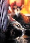 Cat shelter purrrsues its cause