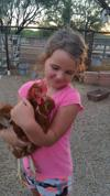 Readers show their chickens