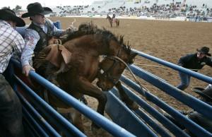 La Fiesta de los Vaqueros