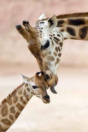 Animal photos of the week