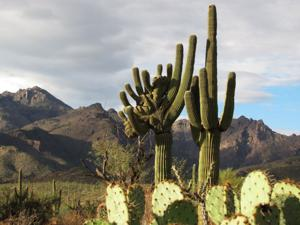 Record rainfall in Tucson