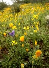 Southwest wildflowers