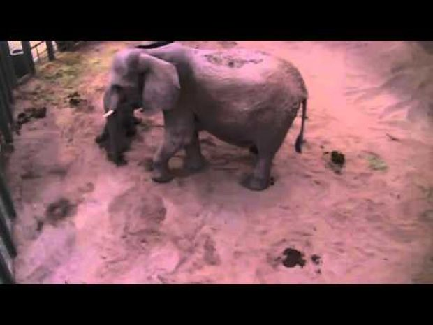 Watch Semba's baby stand up for the first time