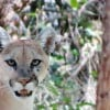 Preserve warns of mountain lion sightings