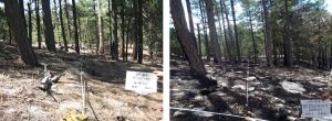 Deer Head wildfire continues to burn