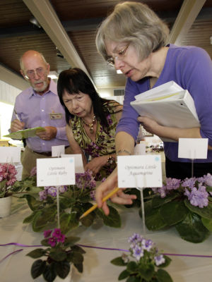 African violet society offers 3 meetings a month