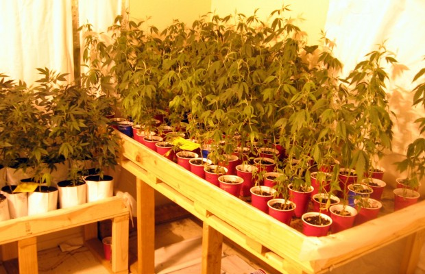 how to grow high grade weed