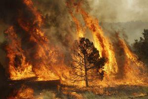 Court backs secondary fire damage claim