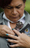 For rehab worker, tiny monkey just another life in need of care