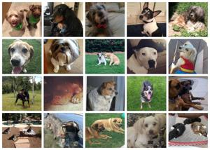 141 awesome dogs in Tucson