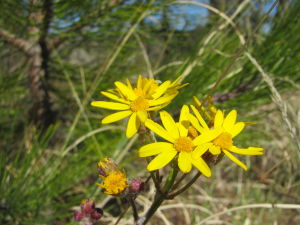Mountain wildflowers are blooming already in Catalina Mountains