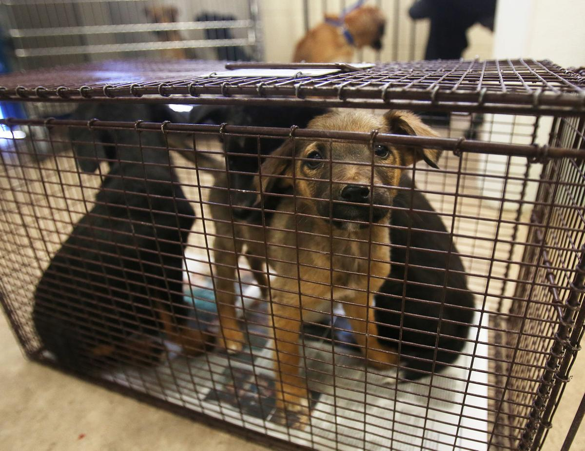 Free Dog Vaccinations Tucson
