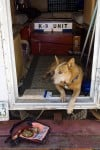 Rescued dogs come to the rescue