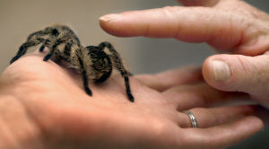 Photos: American Tarantula Society Conference