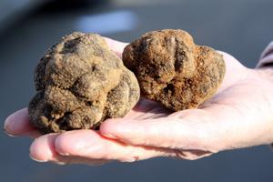 It's truffle mania, and not for chocolate