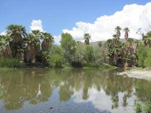 Agua Caliente pond has some water again