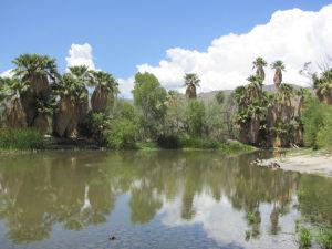 Monsoon boon: Agua Caliente pond on rise again