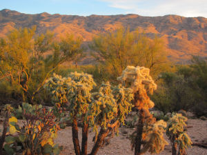 Saguaro Park re-opens trails, campgrounds in Rincons