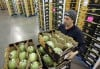 State no longer is sending produce screeners to Mexico