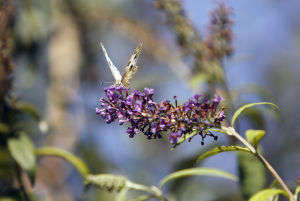 Photos: Butterflies at Ventana Canyon Resort