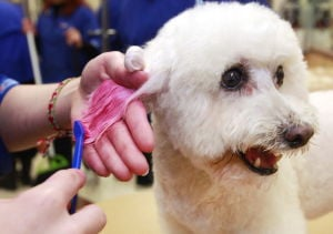 PetSmart considers putting itself up for sale