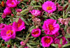 Flowering and edible plants